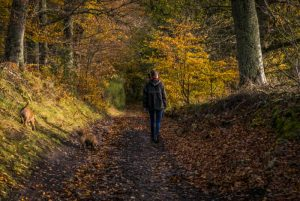 coulhouse walking Dog Walking in the Scottish Highlands, near the Could House Hotel, Contin.