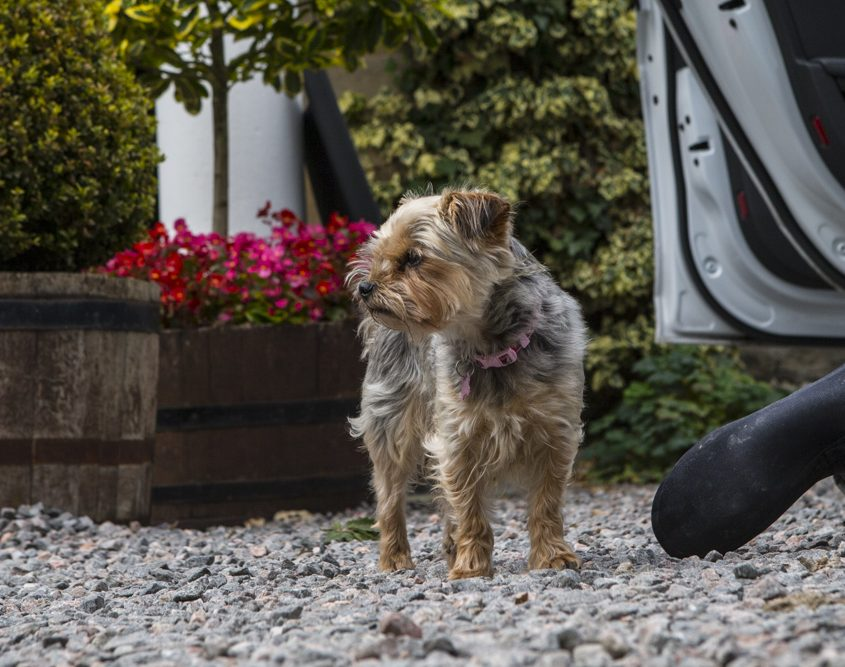 Coul House Hotel, Dog Friendly hotel Scotland, Scottish highlands.