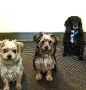 Dog Friendly at Coul House Hotel, Contin, Scottish highlands.