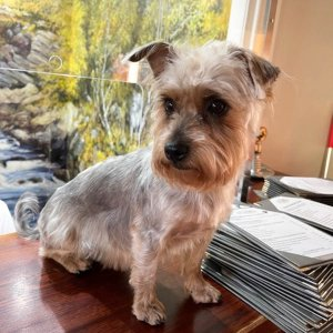 Coul House Dog Friendly Hotel, Coul House is a Scottish Country House Hotel in Contin, 30 minutes Noth of Inverness at the start of the North Coast 500 route.